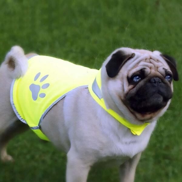 Gilet de sécurité fluorescent pour chien Chasuble de sécurité pour chien