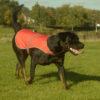 Veste fluorescente pour chien